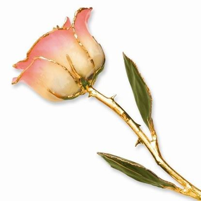 Lacquer Dipped Gold Trimmed White Pink Rose