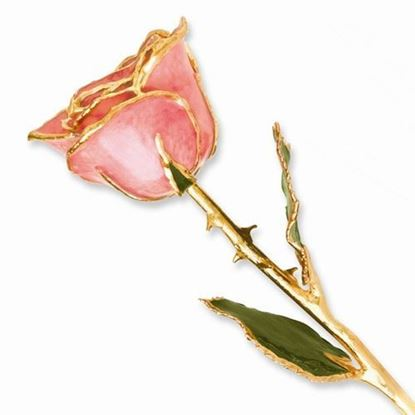 Lacquer Dipped Gold Trimmed Pink Rose